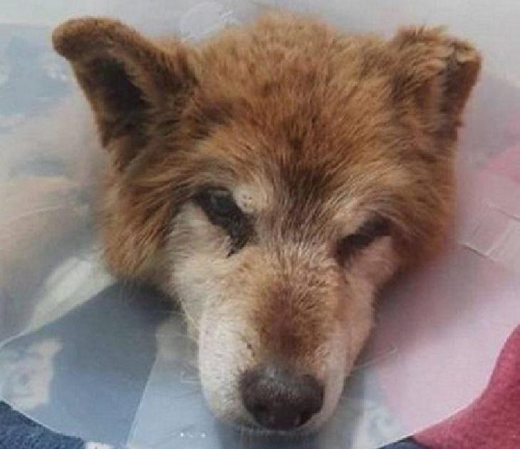 Cane riesce a trovare casa dopo 10 anni passati nel rifugio (VIDEO)