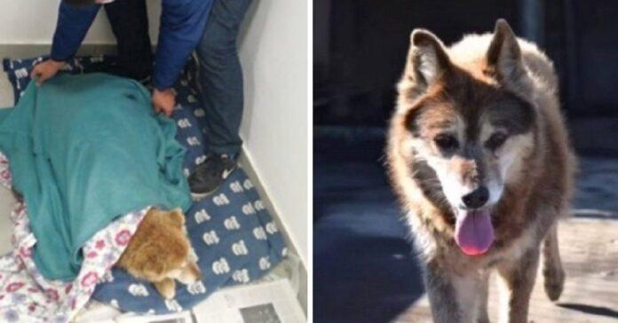 cane riesce trovare casa dopo 15 anni di attesa