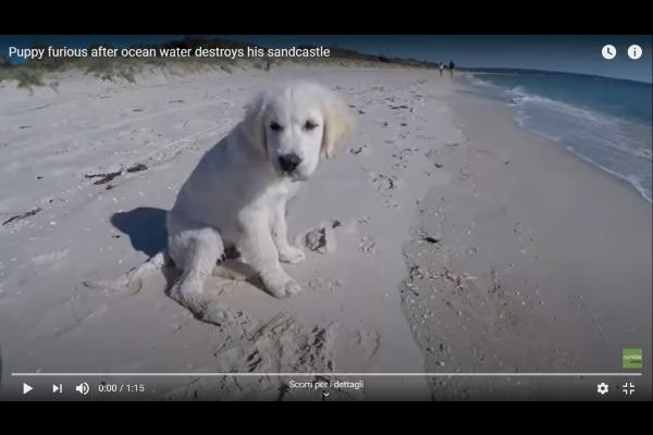 Cane si arrabbia tantissimo per il castello di sabbia distrutto e abbaia alle onde - VIDEO