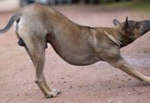 cane che fa stretching
