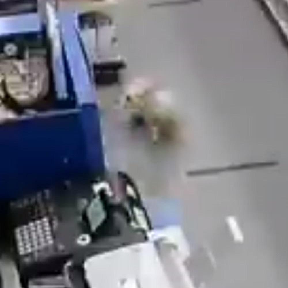 cane coraggioso interviene situazione