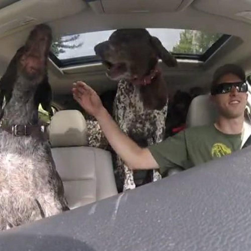 Cani esplodono di felicità quando scoprono la loro destinazione (VIDEO)