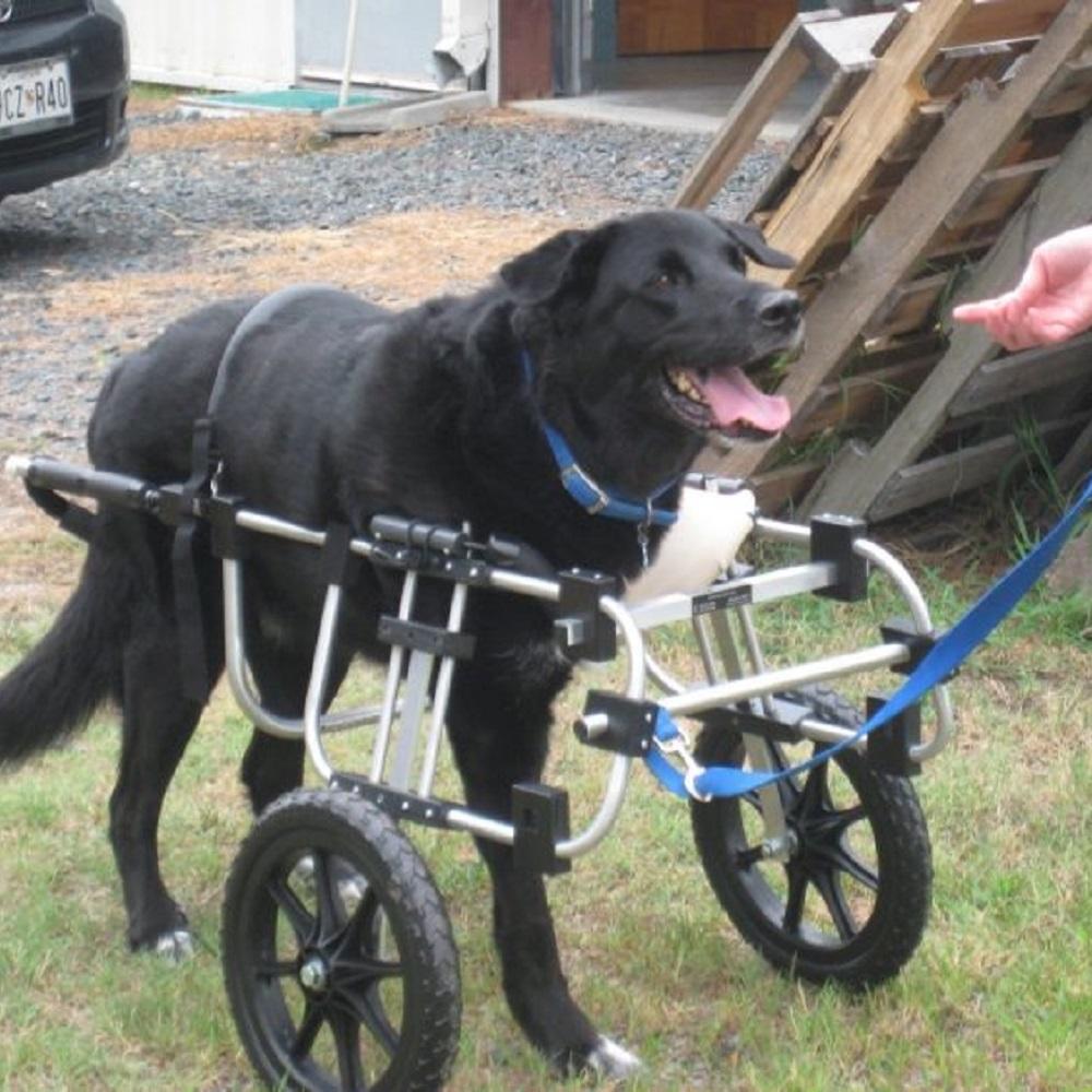 Cani ricevono sedie a rotelle grazie al lavoro di un 90enne (VIDEO)