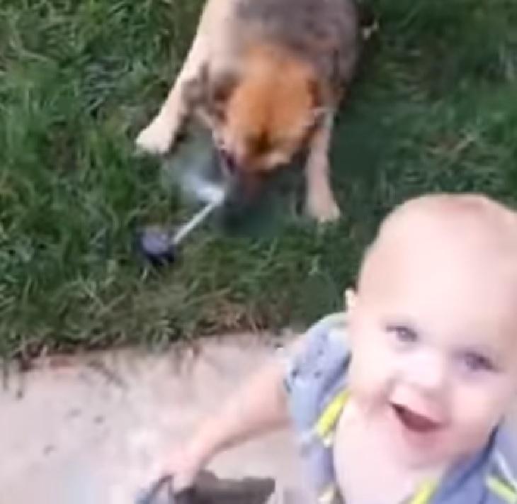 Coraggioso pastore tedesco difende il bimbo dall'irrigatore (VIDEO)