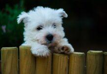 cucciolo curioso cane
