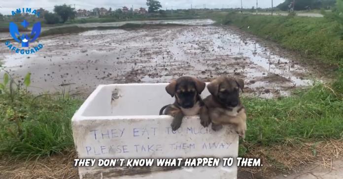 cani in una scatola