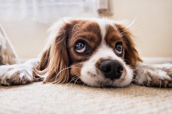 foto cuccioli di cane buffi