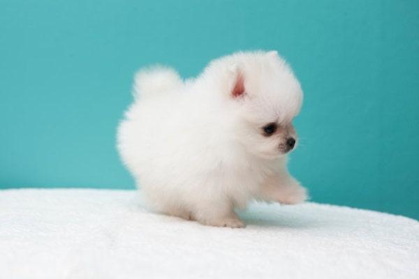 cuccioli di cane foto piccolissimi