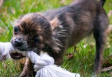 cuccioli di cane giochi fai da te