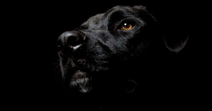cane nero fotografato dal basso