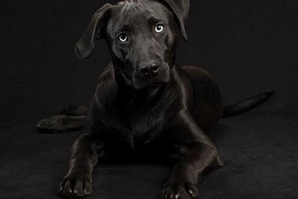 cane nero con occhi chiari