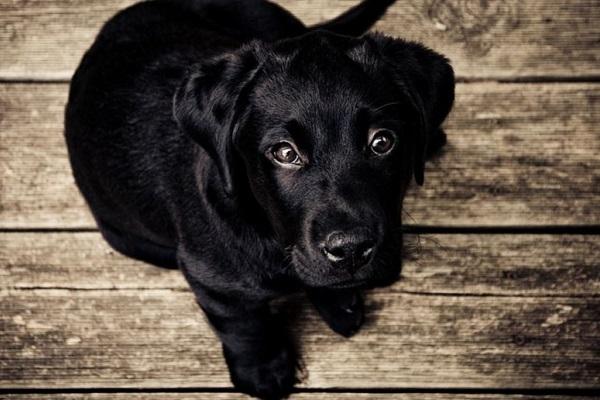 cucciolo di cane che guarda in alto