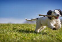 cuccioli di cane oggetti non consigliati