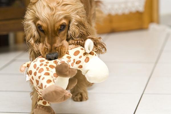 cuccioli di cane oggetti non divertenti