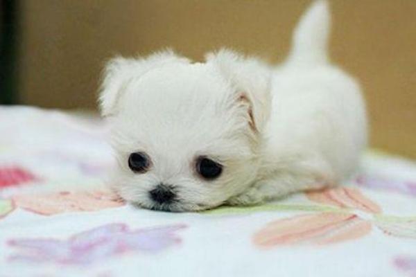 cuccioli di cane piccolissimi foto