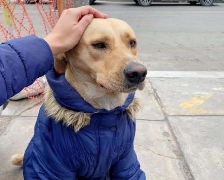 firuco cane aspetta ospedale