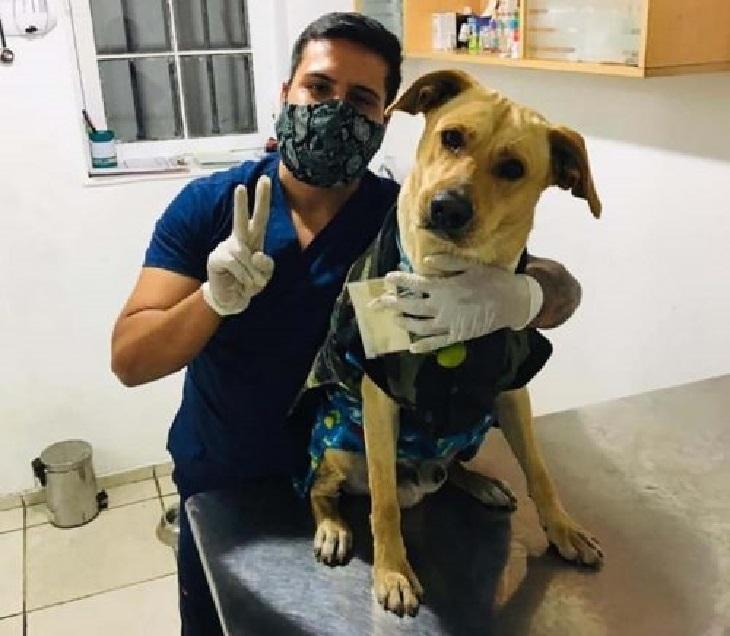 firuco cane meli veterinario