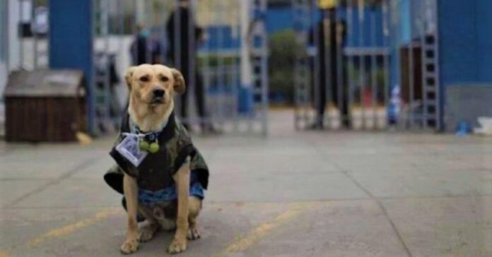 cucciolo aspetta fuori ospedale motivo