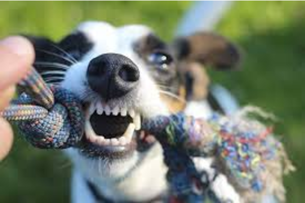 Il cucciolo di cane è stato morso: cosa bisogna fare per aiutarlo