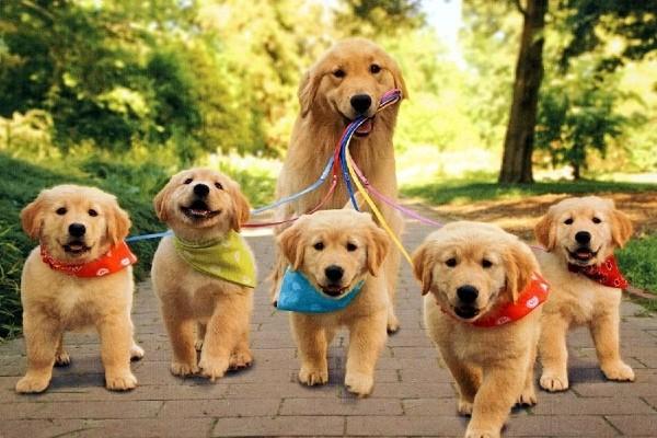 Cucciolo di cane e mamma cane: tutti gli atteggiamenti da conoscere