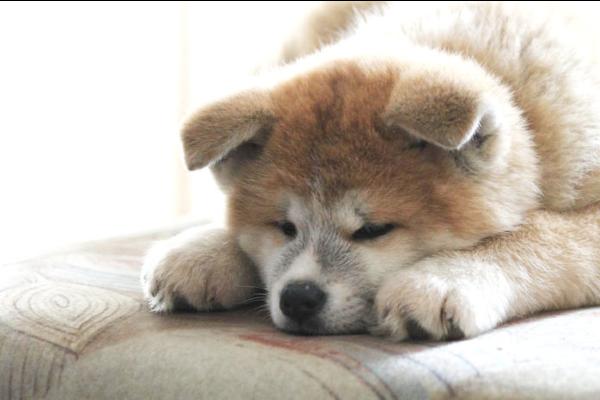 Cucciolo di cane fa gli agguati: perchè lo fa e come farlo smettere