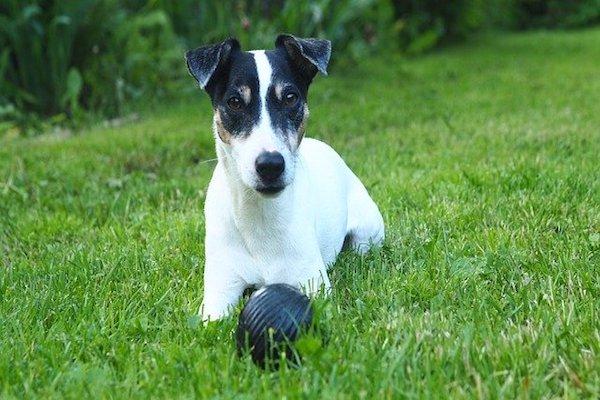 Cucciolo di cane non si separa dal giocattolo preferito: come mai?