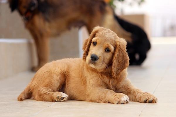 Cucciolo di cane non fa la cacca: cosa può significare e come aiutarlo