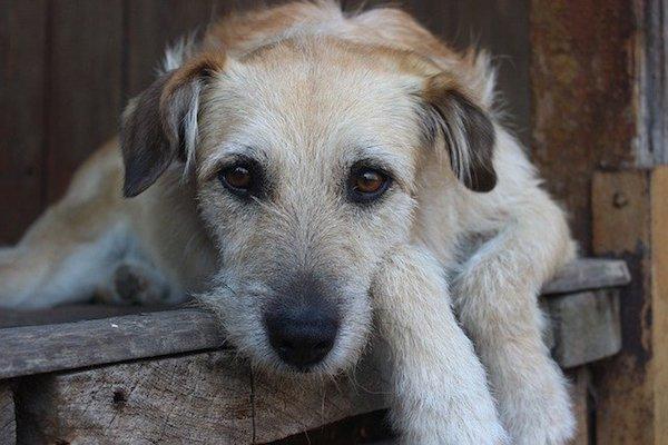 cucciolo di cane immobile