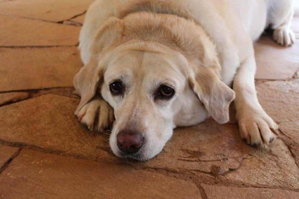 Cucciolo di cane: qual è il peso normale per tutte le taglie?