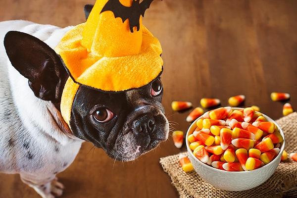 Cucciolo di cane sempre affamato: le possibili cause e come risolvere