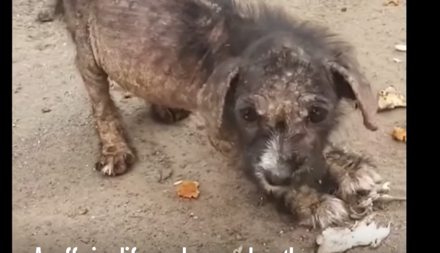 Cucciolo di cane sofferente e triste: salvato per miracolo, si trasforma - VIDEO