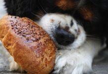 cibi con carboidrati per il cane