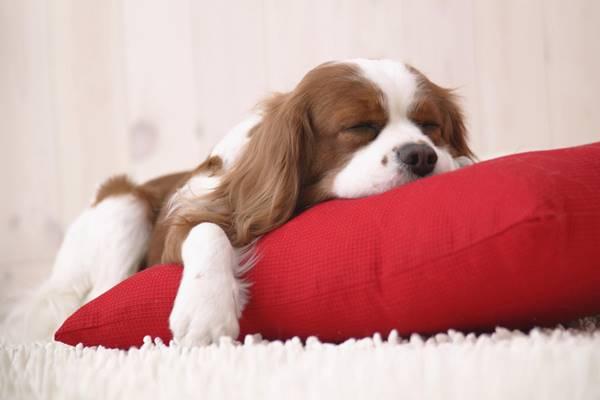 Dove far dormire il cane, per essere felici entrambi