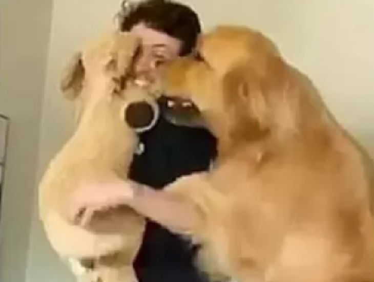 Golden retriever è incredibilmente geloso del proprietario (VIDEO)