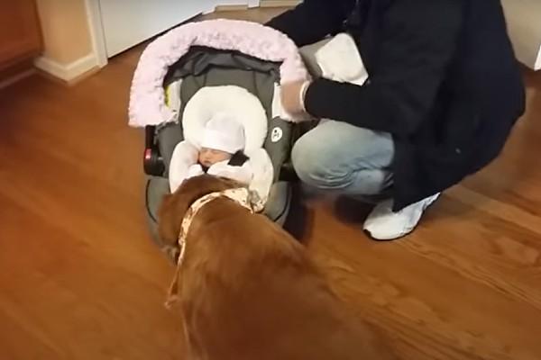 cane e padroni