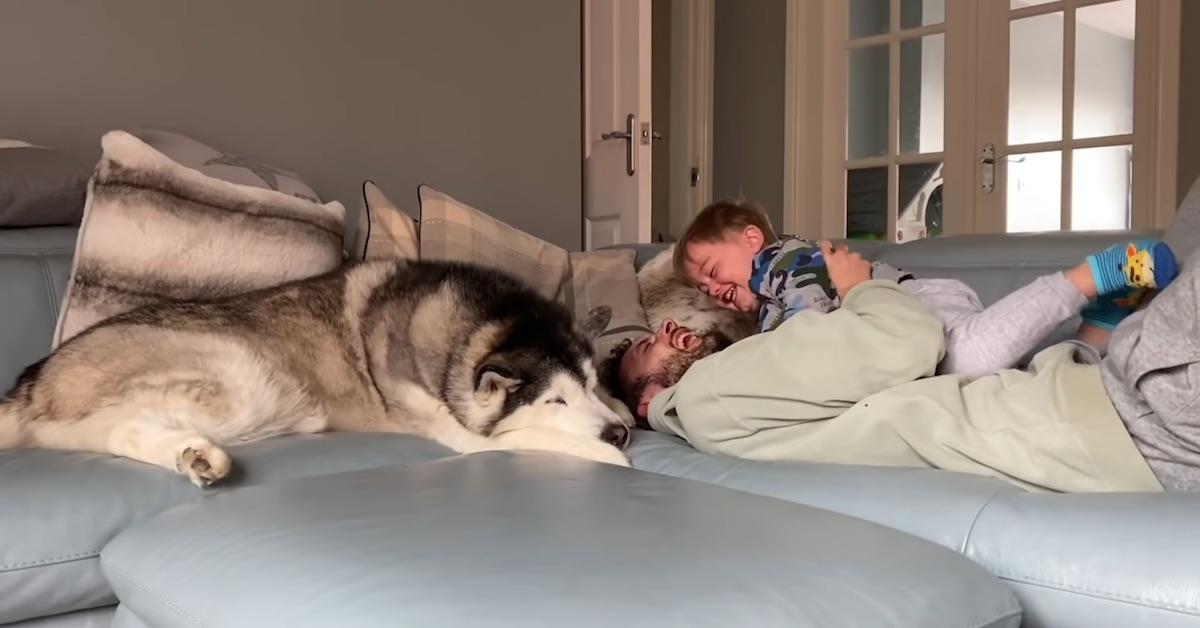 Husky, papà e bambino
