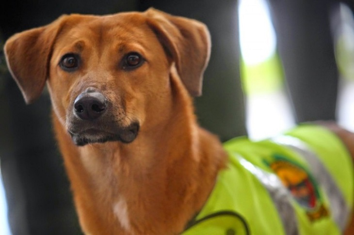 jonny cane agente veterinario