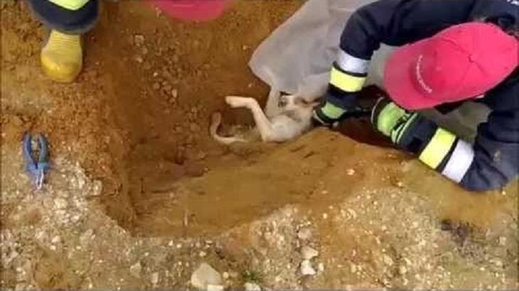 Il salvataggio del cucciolo sepolto vivo sotto terra (VIDEO)