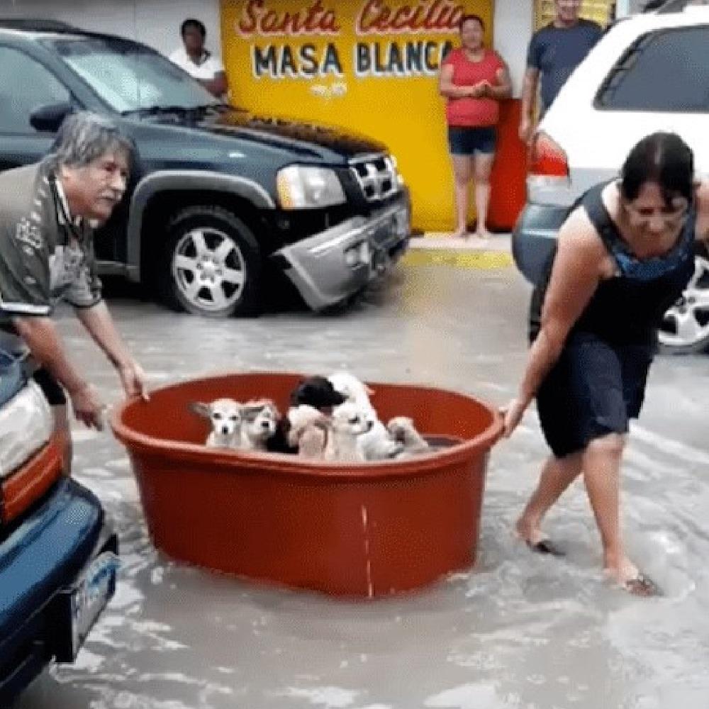 betty aiuta famiglia salvataggio cuccioli