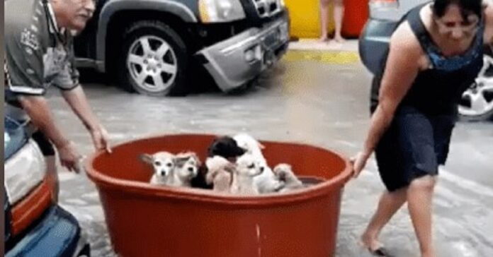 salvataggio 7 cuccioli alluvione