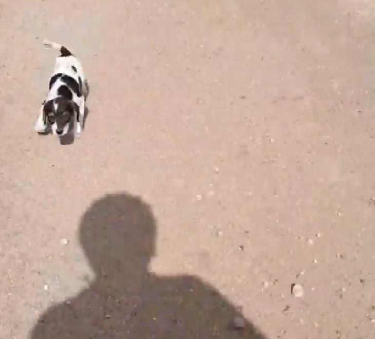 Il salvataggio di Juanita, la cucciola abbandonata in campagna (VIDEO)