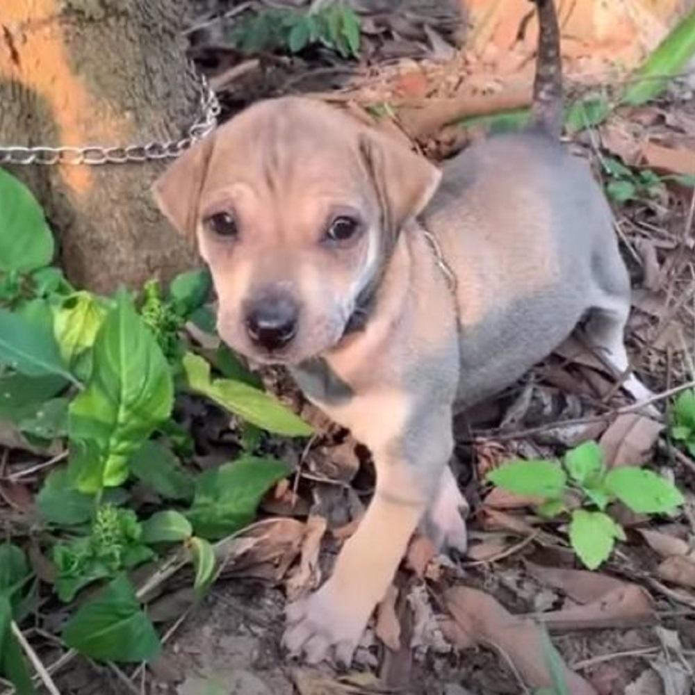 Il salvataggio di un cagnolino abbandonato e legato ad un albero (VIDEO)