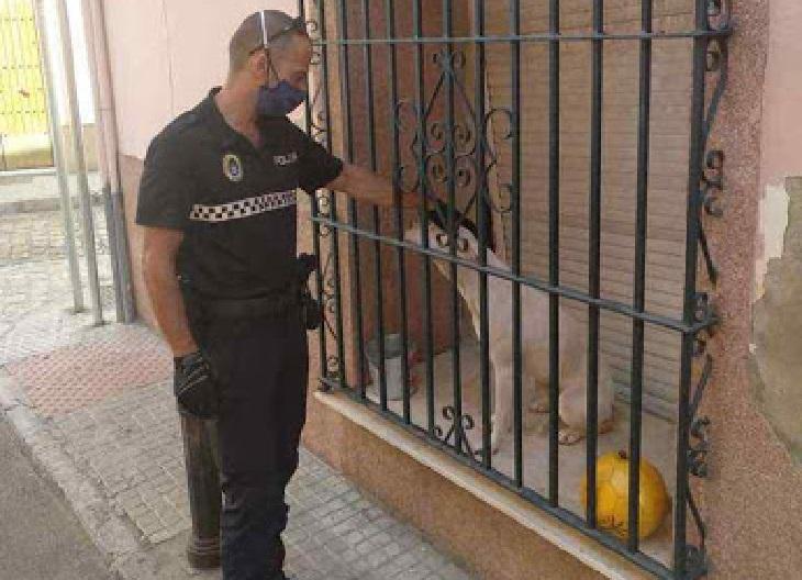 Il salvataggio di un cane bloccato per giorni in un posto orribile (VIDEO)