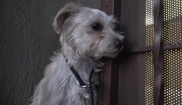 Il salvataggio di un cucciolo terrorizzato dalle persone (VIDEO)