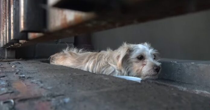 salvataggio cucciolo terrorizzato persone