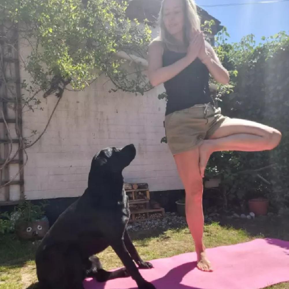 Labrador interrompe la lezione di yoga per giocare con il cuscino (VIDEO)