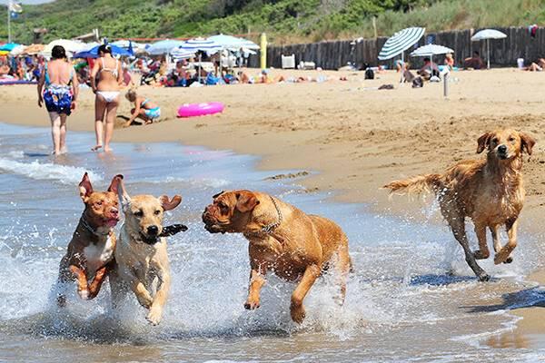 Pulire il cane dopo la spiaggia: le buone pratiche per la cura di Fido