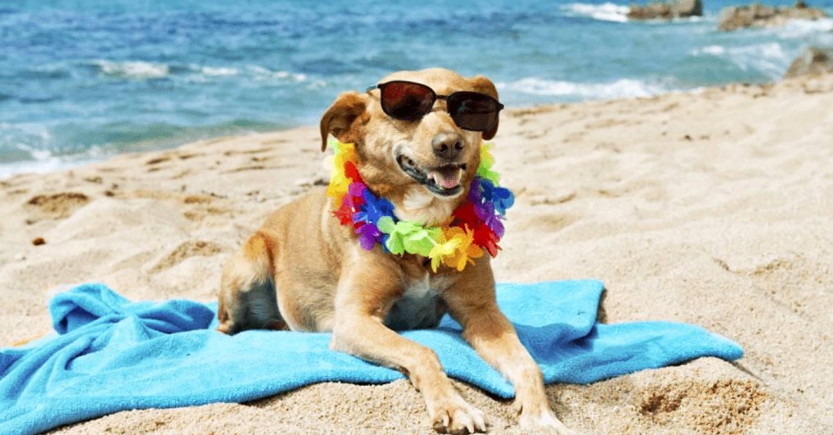 cane buffo con gli occhiali da sole