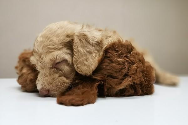 Cane che allatta, qual è la giusta alimentazione? Cibi e consigli