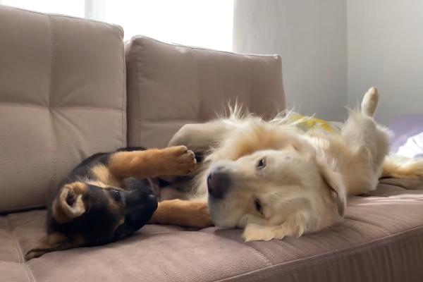 Bailey e Rocky giocano insieme e si divertono moltissimo(VIDEO)